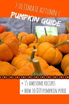 Ultimate Pumpkin Guide   Recipes // neverhomemaker