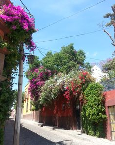 Walk through flowers San Miguel de Allende, Mexico | Learn where to stay at: http://www.roomandwild.com/#/room-gardens-mexico/