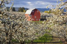 No stranger to recognition, Hood River has been featured in National Geographic Adventure, Smithsonian, and New York Times as a great place to visit.