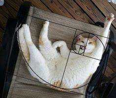 Cats are perfect! We do have proof this time, mind you. Ever heard of the Fibonacci sequence aka the Golden Ratio? Geometry Art, Sacred Geometry, Golden Ratio In Nature, Fibonacci Golden Ratio, Bored Panda, Belle Photo, Cat Lady, Cute Cats, Funny Cats