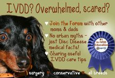 "IVDD Care & Support Forum "" Dodgerslist is the premier website dedicated to  information about paralysis in Dachshunds """