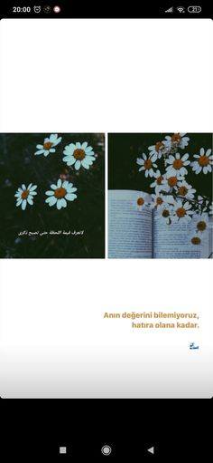 Story Instagram, Daisy, Margarita Flower, Daisies