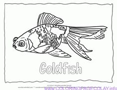 Best Coloring Goldfish Outline Template Picture Hd Hd - Coloring ...