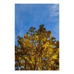 Yellow Leaves Blue Sky Print