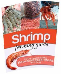 Shrimp Farming, Fish Farming, Aquaponics Fish, Hydroponics, Farming Guide, Farming Ideas, Cash Crop, Farm Gardens, Water Gardens