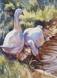 Paul Weaver watercolor of two white geese. Watercolor Bird, Watercolor Animals, Watercolor Landscape, Landscape Paintings, Watercolor Paintings, Chicken Painting, Chicken Art, Farm Paintings, Animal Paintings