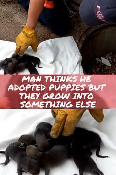 Man adopts puppy that was saved from a drain, months later realizes that's not a dog at all. Pet Finder, Puppy Finder, Free Puppies For Adoption, Cute Puppies, Dog, Lampshades, Pets, Birds, Hairstyles