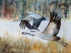 Ein Abend mit den Kranichen im Müritz-Nationalpark | Majestätisch © ein Kranich Aquarell von Frank Koebsch #Kraniche #Aquarelle #Ausstellung #watercolor #crane