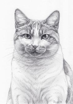 potloodtekening poes Solo, Potlood tekening van kat door Dyenne Nouwen, www.dyenne.nl