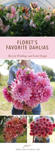 Among Floret\'s favorite dahlias for wedding & event design include: \'cafe au lait,\' \'otto\'s thrill,\' \'labrynth\' and \'mystique\'