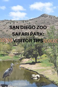 This is a must read guide for your visit to the San Diego Zoo Safari Park. Read on for some helpful visitor tips.