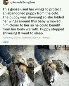 Cute funny animals - 16 Wholesome Memes To Start The Week Off Right Cute Funny Animals, Cute Baby Animals, Funny Cute, Animals And Pets, Cute Dogs, Cute Babies, Funny Pictures Of Animals, Smart Animals, Cute Stories