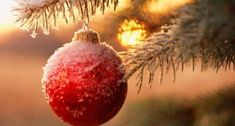 Merry Christmas 2015 Images Wishes Noel Christmas, Merry Little Christmas, Christmas Balls, Winter Christmas, All Things Christmas, Christmas Lights, Christmas Crafts, Christmas Decorations, Christmas Ornaments