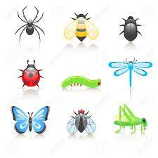 Resultado de imagen para ilustraciones de animales invertebrados