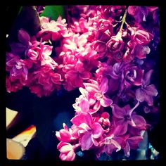 double lilac...
