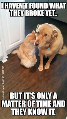 pics from animals fun gallery Angry Cat Memes, Cute Cat Memes, Cat Jokes, Cute Animal Memes, Funny Dog Memes, Cute Funny Animals, Funny Animal Pictures, Cute Baby Animals, Funny Cute
