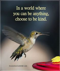 In a world where you can be anything, choose to be kind :) #quote #kindness