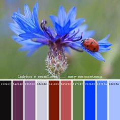 ladybug's cornflower ... mary-margaretmarx #color #colors #colour #colours #colorpalette #colorpalettes #palette #palettes #paintpalette #paintpalettes #creatingcolor #colorful #design #designinspiration #colorinspiration #colordesign #beinspired #hexcode #blue #cornflower #bachelorsbutton #bachelorbuttons #flower #ladybug #bug #insect #mmarx #marymargaretmarx Color Schemes Colour Palettes, Color Combos, Colours That Go Together, Wedding Color Pallet, Pantone, Color Harmony, Color Palate, World Of Color, Color Blending
