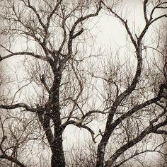 Древо ° ° ° #tree #branches #bnw #bnwphotography #чб #деревья #зима #графика #graphics #деревья #trees #nature #природа #ветки #древо #naturelovers #landscape #white