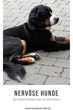 #hundewissen #hundegesundheit Dog Training, Animals And Pets, Chihuahua, Dog Lovers, Dogs, Amelie, Website, Beautiful Things, Dog T Shirts