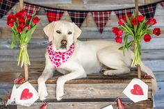 Valentine's Day Dog Bandana by DogCharms on Etsy