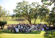 California Vineyard Wedding BR Cohn Vineyard, Sonoma