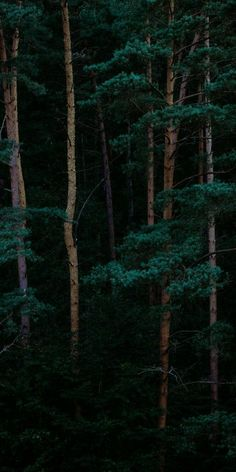 Wallpaper Iphone – Tree Forest iPhone Wallpaper Source by Beste Iphone Wallpaper, Tree Wallpaper Iphone, Nature Wallpaper, Witch Wallpaper, Iphone Homescreen Wallpaper, Tree Forest, Dark Forest, Forest Art, Image Beautiful