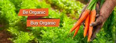 Say Hello to Organic, Hello to Bio Basics Go Online, Do You Feel, Organic Recipes, Say Hello, Don't Worry, Healthy Lifestyle, This Or That Questions, Country, Food