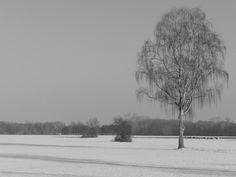 Ensamt träd i snölandskap.