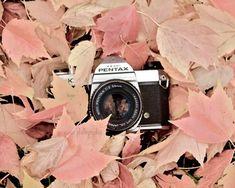 Cámara de impresión, arte cámara Vintage, decoración Vintage Camera, impresión del arte de otoño, aún vida cámara fotografía impresión, cartel Retro cámara, Pentax