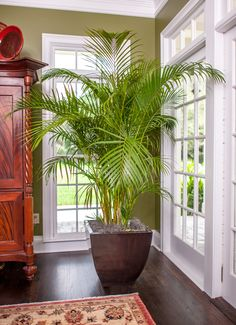 We grow the best Areca Palm to help turn your home into a slice of paradise. Our plant experts have developed a safe and reliable shipping method.