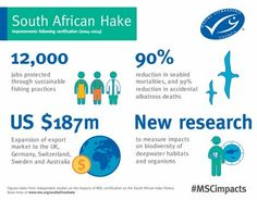 South African hake fishery infographic