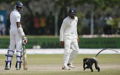 Monkey stops play - cricket interrupted by hairy 12th man: http://www.telegraph.co.uk/sport/cricket/international/srilanka/11803161/Monkey-stops-play-Test-match-interrupted-by-unexpected-12th-man.html…