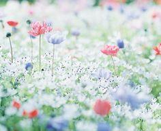 被写界深度 — floralls: by une**