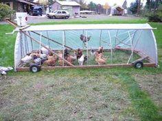 Chicken Coop Photos