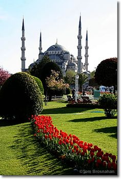 Blue Mosque & Red Tulips, Istanbul, Turkey