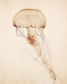 Curiosities | Jellyfish Photography