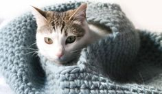 This crochet cat house pattern is so cute and cozy and sure to become your kitty's favorite place to snuggle! FREE pattern ...  #crochet  #fiber
