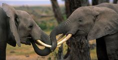 Act Now to End Elephant Slaughter