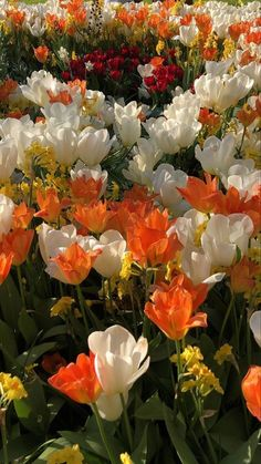 Flowers Nature, My Flower, Beautiful Flowers, Beautiful Scenery, Lotus Flower, Animals Beautiful, Flower Wallpaper, Wallpaper Backgrounds, Iphone Wallpaper
