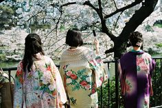 Japanese girls.  Kimonos.  Cherry blossoms.