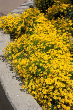 photos of low water and drought tolerant plants