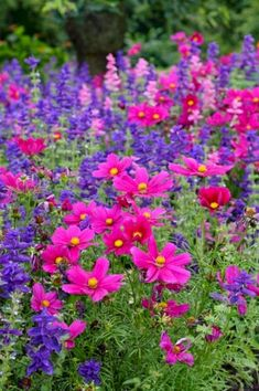 Garden Planning My Favorite Plant Combinations 5 - Gardening with Containers is a whole lot more fun. It functions as far more than only a garden, however. You've started to plan your next garden regarding needs and desires, your finances, an… Wild Flowers, Beautiful Flowers, Cosmos Flowers, Cosmos Plant, Beautiful Gorgeous, Herbaceous Border, Plantation, Dream Garden, Flower Beds