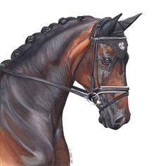 """""""Mi piace"""": 1,170, commenti: 18 - Kate Spratt Equine Art (@kate_spratt_equine_art) su Instagram: """"And the final proof of the super handsome Woodcroft Derello or Craig as he's known to his pals.…"""""""