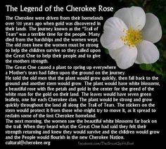 The Legend of the Cherokee Rose. Being part Cherokee and living a few minutes from near the trail of tears start (living in Dawsonville, Ga, USA) this hits close to home Cherokee Rose, Native American Cherokee, Native American Wisdom, Native American History, American Indians, American Symbols, American Women, Cherokee Indian Art, Cherokee Indian Tattoos