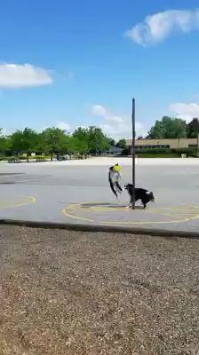 Dog Tether-ball - Animals and pets - Funny Animal Videos, Cute Funny Animals, Funny Animal Pictures, Funny Dogs, Cute Puppies, Cute Dogs, Dogs And Puppies, Doggies, Mundo Animal