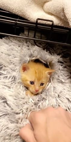 Funny Cute Cats, Cute Baby Cats, Cute Cats And Kittens, Cute Little Animals, Cute Funny Animals, Kittens Cutest, Cute Dogs, Funny Videos Of Cats, Cat And Dog Videos