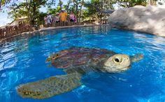 Tamar (marine turtles) Project - Praia do Forte, Bahia