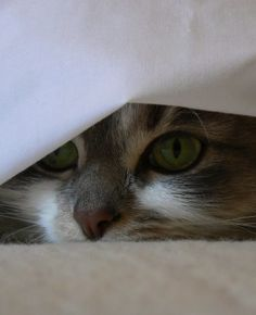 under the sheets...