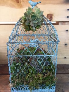 Succulent Birdcage mothers day
